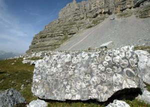 fossili-dolomiti-brenta