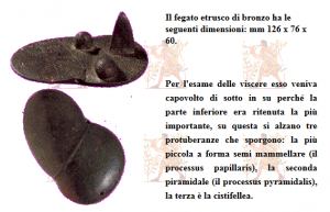 etruschi fegato 1